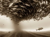 7-fishes-sony-award-winning-photography-by-christian-vizl
