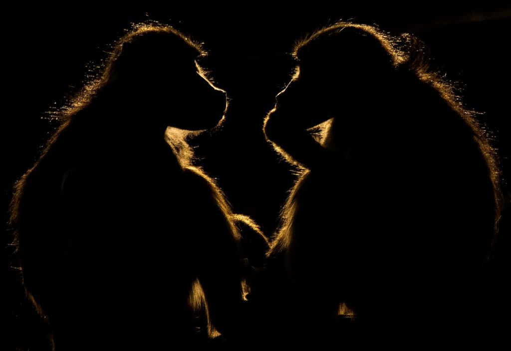 baboons natgeo travel photography by paul wynn