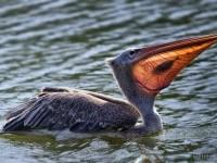 10-bird-photography