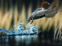 11-best-bird-photography