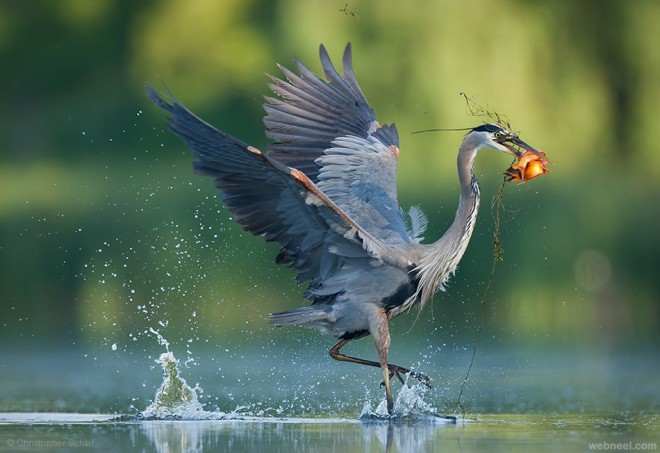 best bird photography by christopher