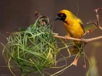 15-beautiful-bird-photography