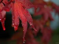 19-rain-photography