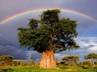 2-best-rainbow-photography