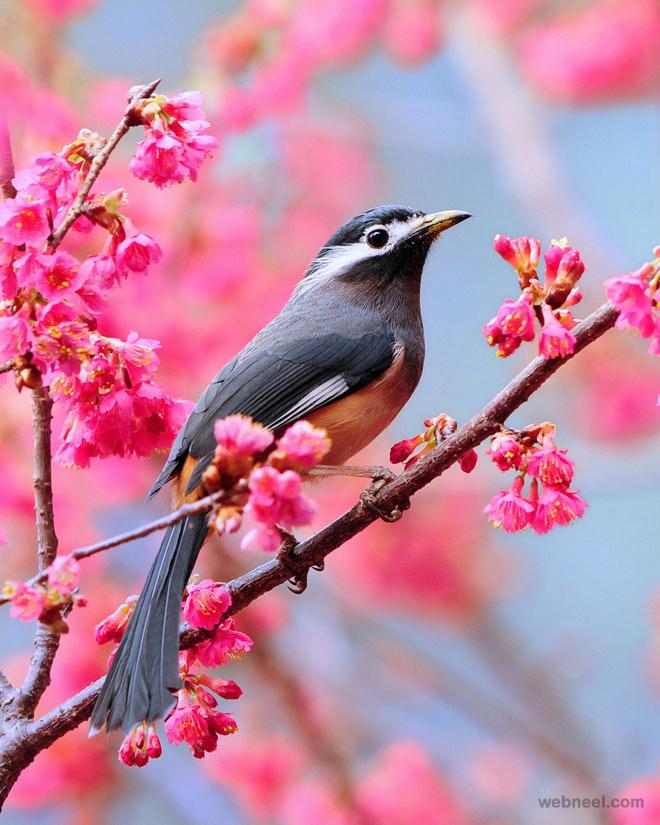 Birds award winning photography
