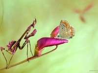 28-best-macro-photography