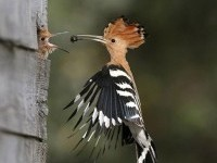 7-bird-photography