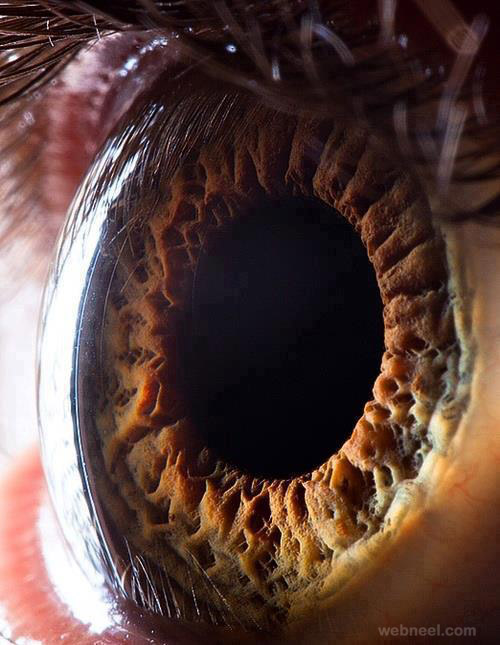 Hd View Of Human Eye