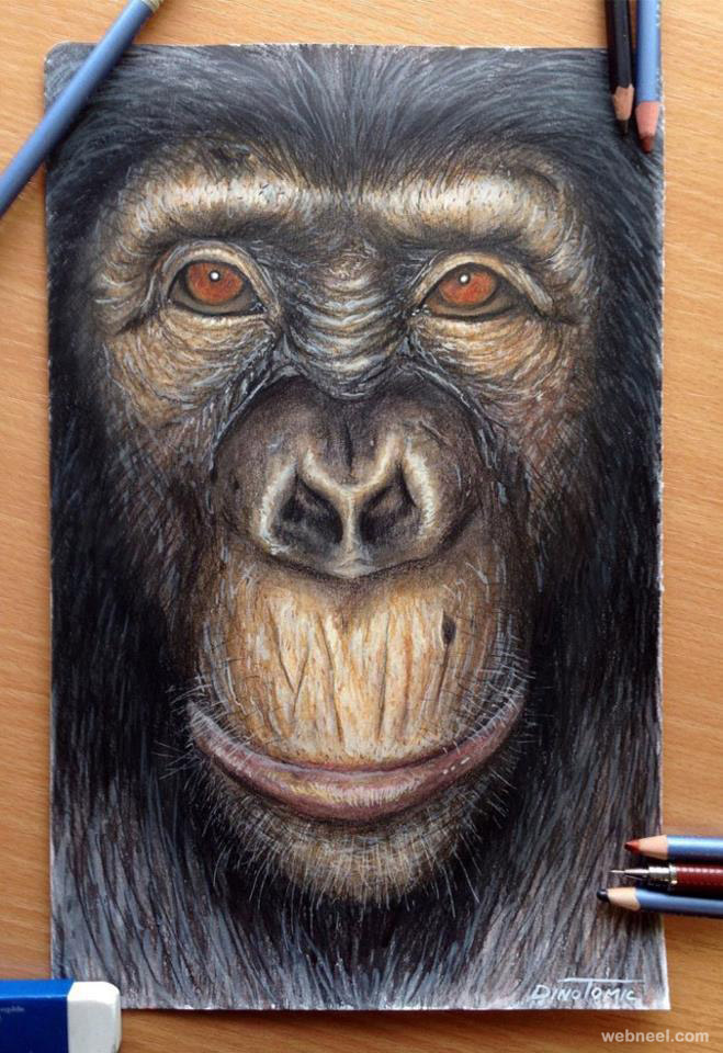 realistic colour pencil artwork monkey face drawing beautiful