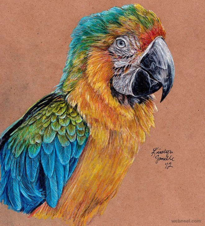 drawings bird color pencil - Color Drawings
