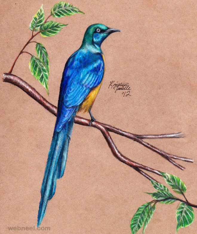 Pretty Bird Drawing Bird Drawing