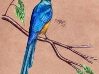 12-bird-drawing
