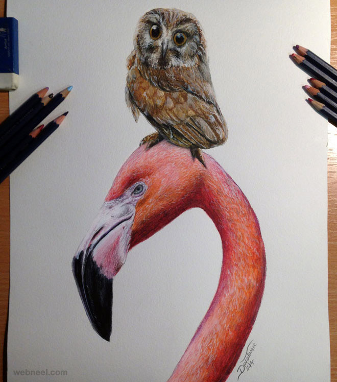 bird colored pencil