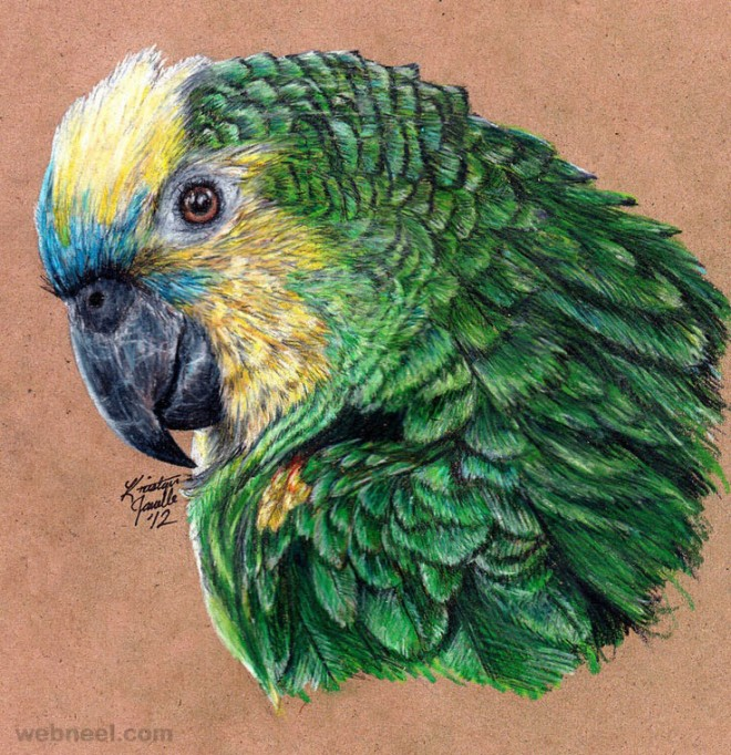 birds drawings
