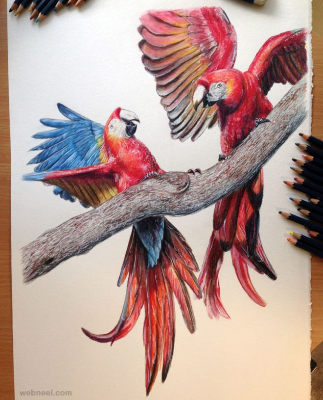 bird drawings realistic