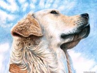 12-dog-paintings-by-artsanddog