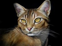17-cat-animal-painting-by-heather