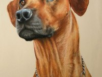 18-dog-pastel-drawing-by-escykane