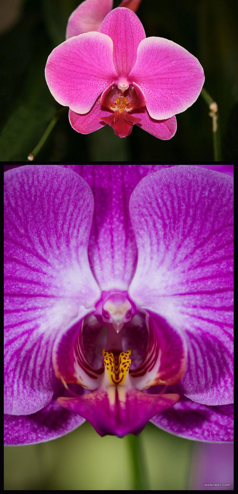 weird flower pink moth orchid