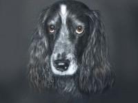21-dog-drawing-by-julyart