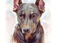 24-dog-colored-pencil-drawing-by-tavington