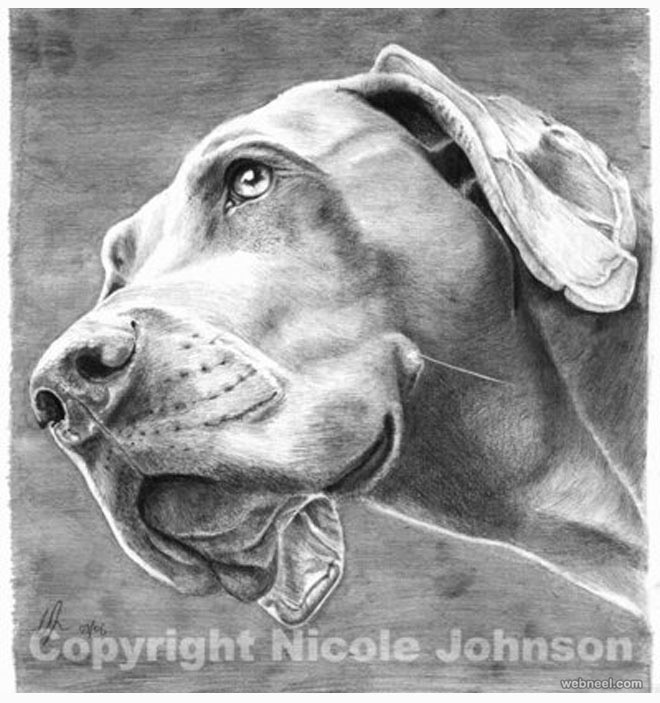 dog drawing by nicole johnson