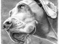 25-dog-drawing-by-nicole-johnson