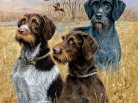 3-dog-painting-by-killen