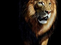 6-lion-painting-by-heather