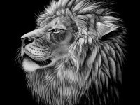 9-animal-painting-by-heather