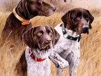 9-dog-painting-by-killen