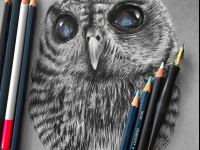 owl realistic pencil drawing by Jonathan Martinez