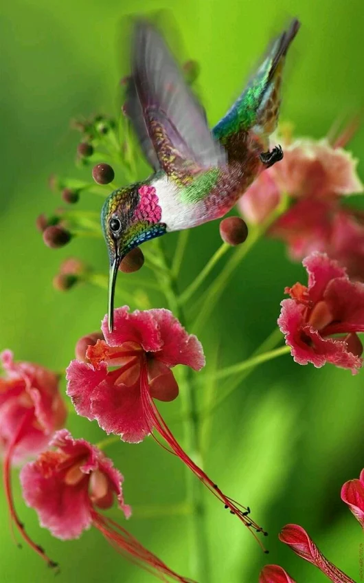 kingfisher photography by angelina castillo