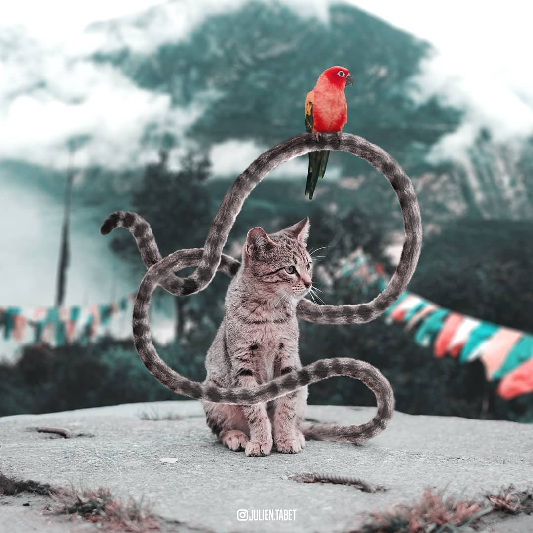 cat photoshop animal photo manipulation by julien tabet