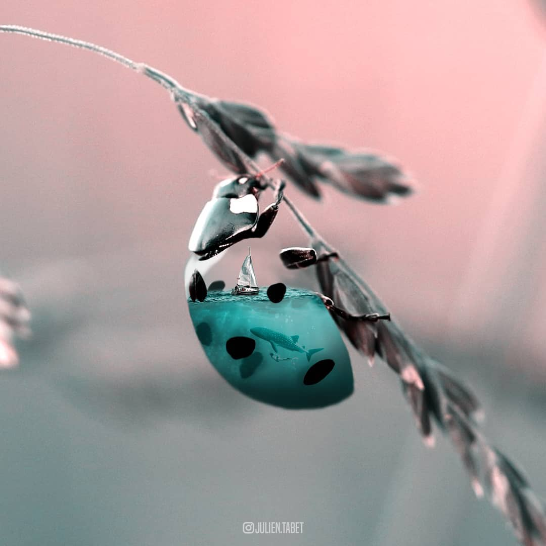 ladybug photoshop animal photo manipulation by julien tabet