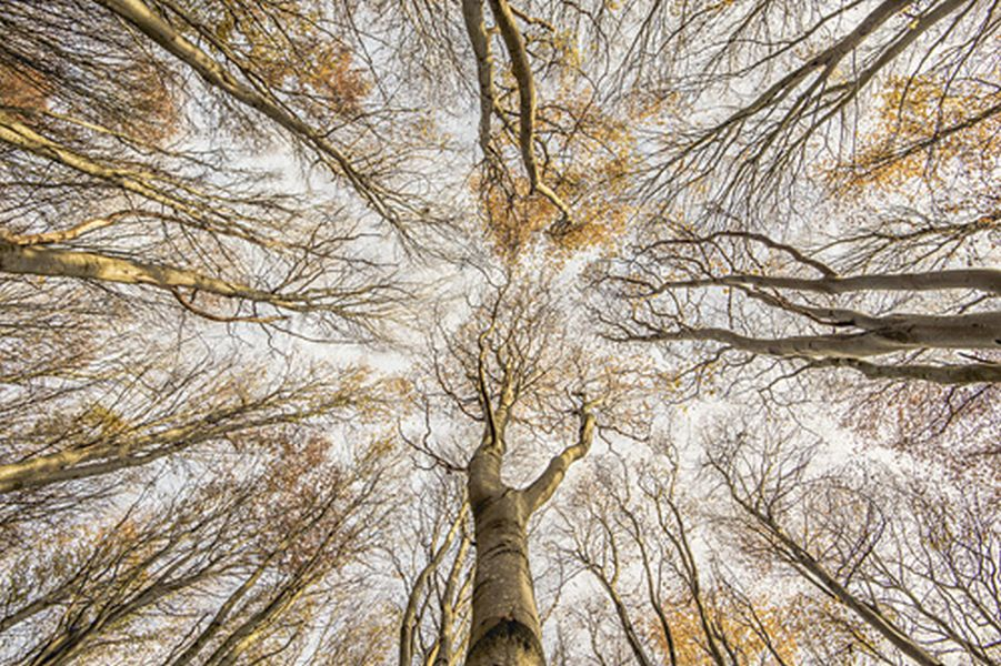 beech for sky scottish photographer of the year by