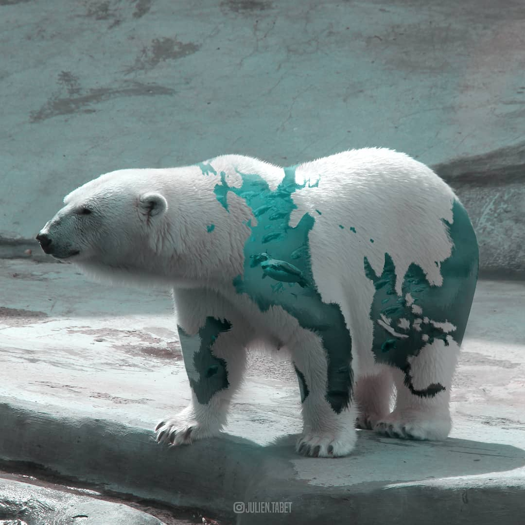 polarbear photoshop animal photo manipulation by julien tabet