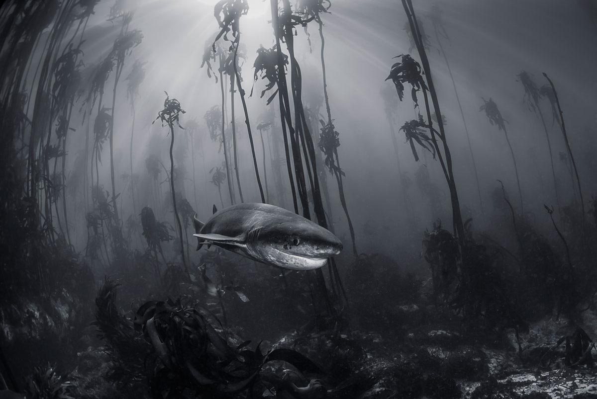 underwater travel photography by national geographic