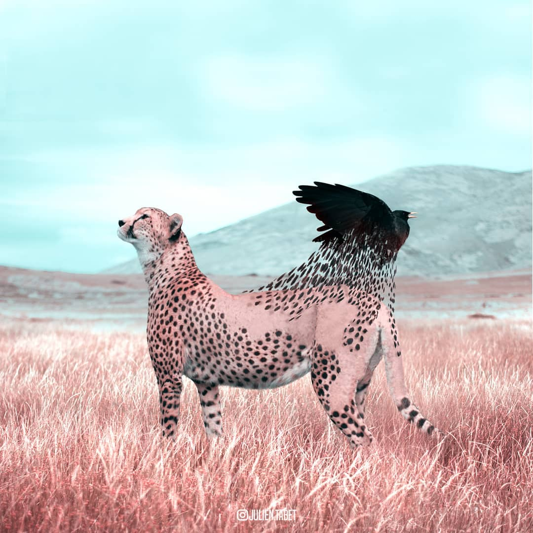 cheetah bird photoshop animal photo manipulation by julien tabet