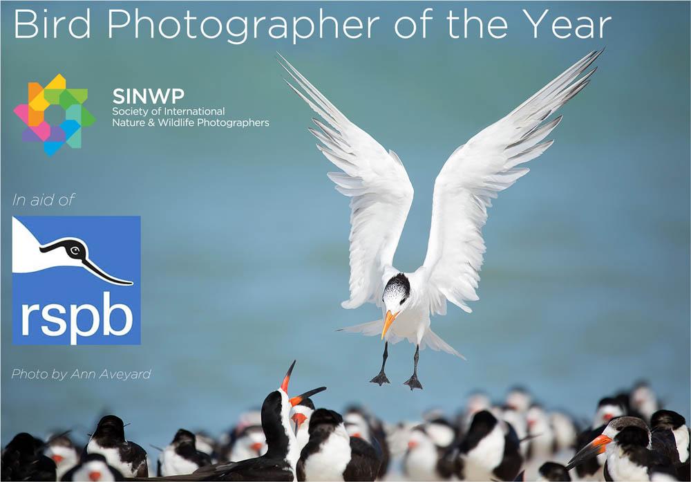 flight bird photography by ann aveyard