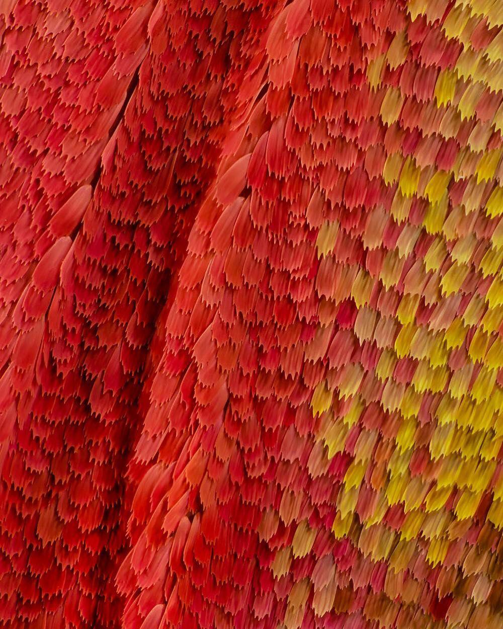 macro photography atlas moth by chris perani