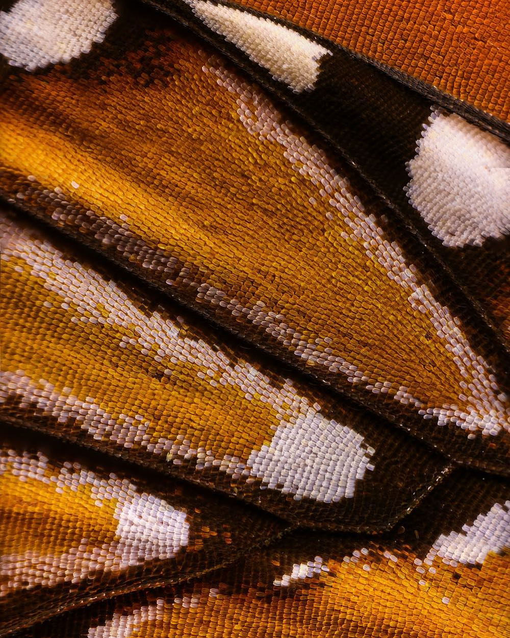 macro photography monarch butterfly by chris perani