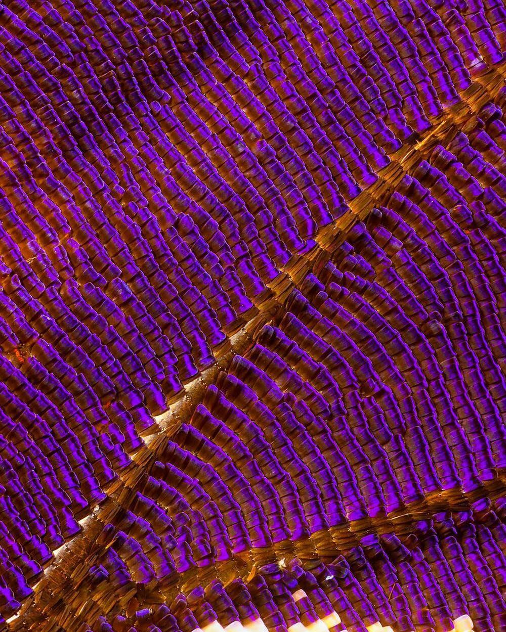 macro photography violet by chris perani