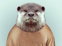 12-animal-portrait-photography