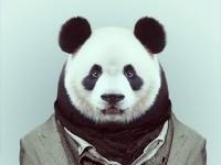 18-animal-portrait-photography