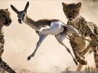 22-best-wildlife-photography