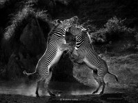 25-best-wildlife-photography