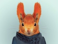 36-animal-portrait-photography