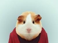 38-animal-portrait-photography