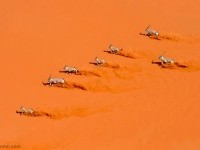 6-best-wildlife-photography